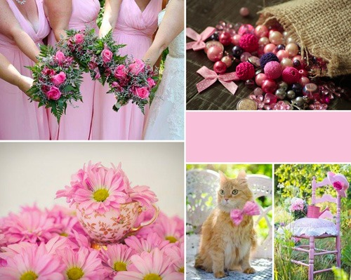 palette des roses